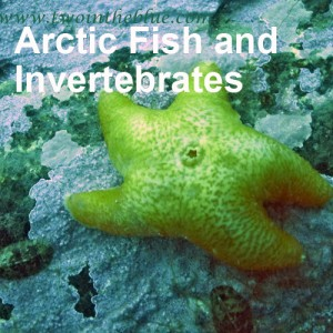 Arctic Fish and Invertebrates