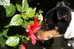 sniffing-a-flower
